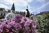 Bielsko-Biała kolorowe, jak nigdy! W mieście zakwitnie 30 tys. kwiatów. Będzie też dywan z tulipanów