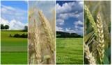 Ile kosztuje ziemia rolna? Ceny w II kwartale 2016 - województwa [wykresy]