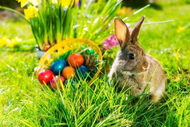 Wielkanoc 2021. Święta Wielkanocne zbliżają się wielkimi krokami. Znajdziesz u nas piękne kartki wielkanocne, które wyślesz swoim bliskim za pośrednictwem SMS, MMS czy Messengera. Nie masz pomysłu na wielkanocne życzenia? Piękne kartki na Wielkanoc sprawią radość Twoim bliskim i znajomym!
