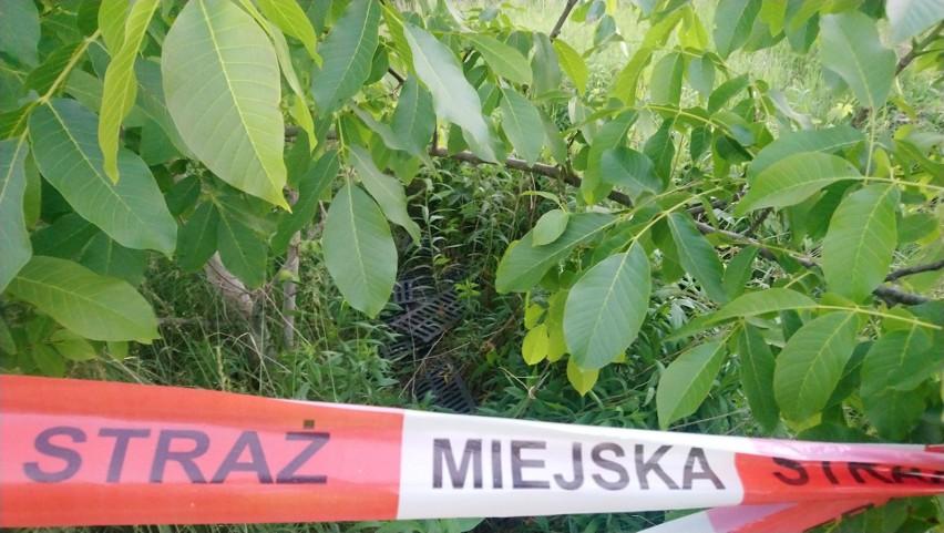 Kratki deszczowe zostały znalezione przy ulicy Karpia w...