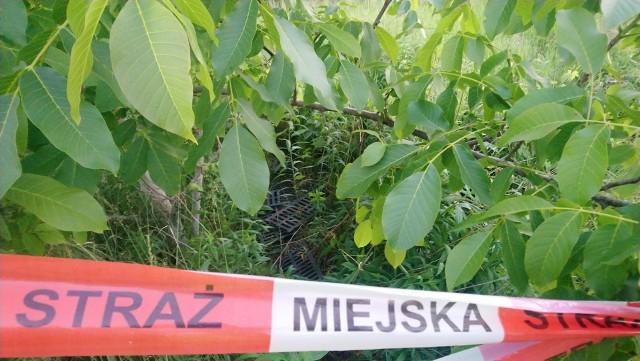 Kratki deszczowe zostały znalezione przy ulicy Karpia w Poznaniu.