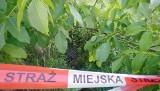 Ktoś wyrzucił około 15 kratek deszczowych na poznańską łąkę. Prawdopodobnie pochodziły z kradzieży