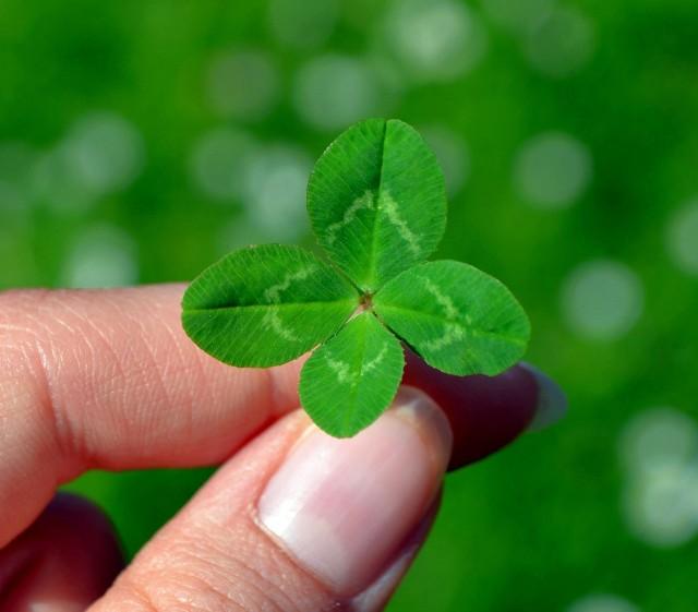 Najpopularniejszy symbol szczęścia to czterolistna koniczynka.