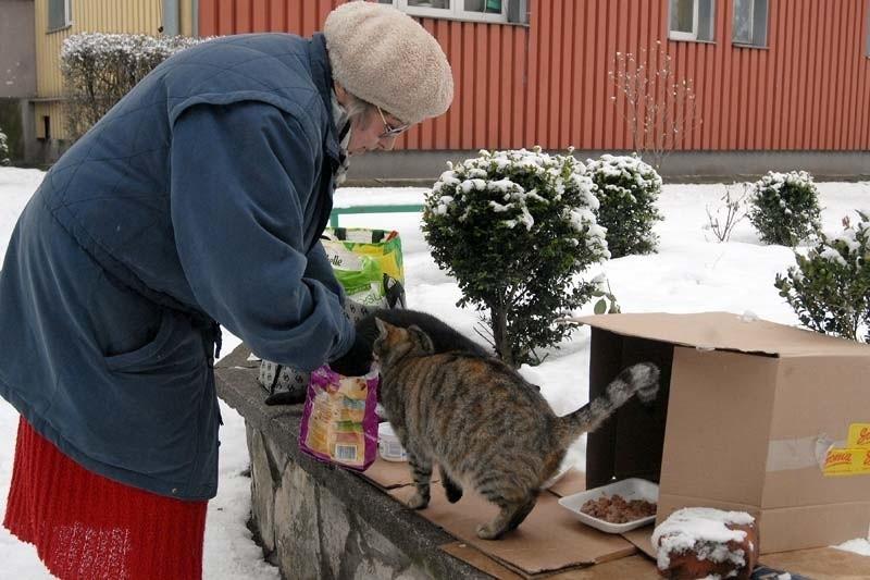 - To ja powinnam powiadomić policję, że spółdzielnia znęca się nad zwierzętami, bo pozbawia koty schronienia - oburza się Danuta Hepnar z Łańcuta.