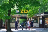 Zoo Poznań otwiera się ponownie 19 czerwca. Nie dojedziesz tam jednak Maltanką, nie zobaczysz też niektórych zwierząt. Jakie zmiany czekają?