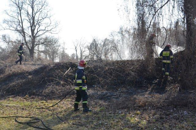 Pożar traw i krzaków na Starym Mieście w Kostrzynie.