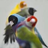 Przyjdź i podziwiaj kolorowe i rozśpiewane ptactwo!