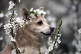Fotografie jak z magazynu mody? Takimi pięknymi zdjęciami zielonogórskie schronisko promuje psy do adopcji. Zwierzaki podbiją Wasze serca