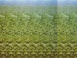 Stereogram. Trójwymiarowy efekt na płaskim obrazku.