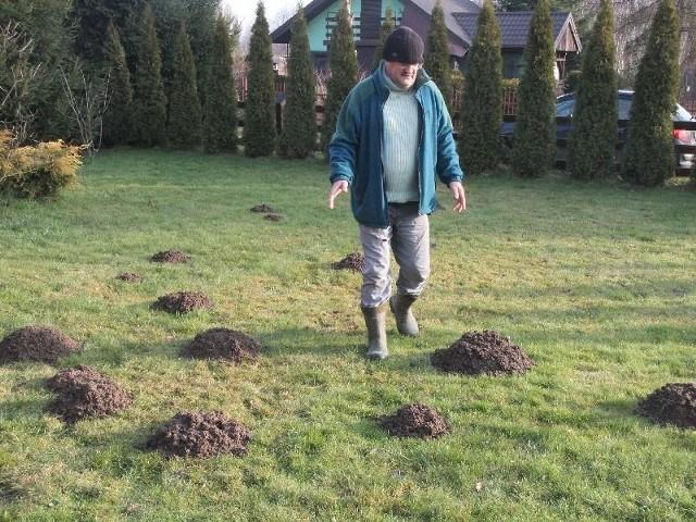"""Ciepła zima w ogrodzieZupełnie zdezorientowane pogodą krety przystąpiły w ogrodach do rycia kopców. - Taka aktywność jest dla nich zupełnie nietypowa w grudniu. Widocznie na razie nie zanosi się na zimę – wyjaśnia pan Zygmunt Studziarski, ogrodnik z ogródków działkowych """"Zielona Dolina"""" koło Masłowa."""