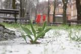 Jaka będzie zima 2021? IMGW podaje, kiedy może spaść pierwszy śnieg [długoterminowa prognoza pogody]