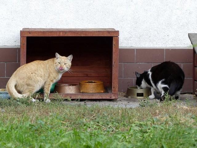 Fundacja Koty SOS dba o bezdomne koty, które mieszkają na Błoniu i Górzyskowie. Mruczków jest coraz więcej...