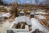 Bahamy: 3 tygodnie po huraganie Dorian odnaleziono żywego pieska. Nazwano go Cud [WIDEO]