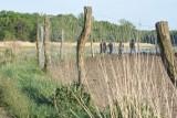 Martwa krowa z cielakiem w Odrze. Co się stało nad rzeką w gminie Bytom Odrzański? Sprawę wyjaśnia policja i inspekcja weterynarii