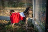 Bezdomne psy z azylu w Dębicy czekają na święta w ciepłym domu! Nie kupuj, zaadoptuj!