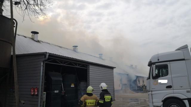 Pożar chlewni w Perzynach. Ogień gasi 10 zastępów straży pożarnej
