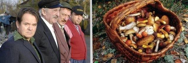 Takie okazy można znaleźć w lasach gminy Długosiodło