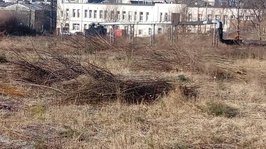Czy na miejscu dawnej Estrady rusza budowa centrum handlowego? W sobotę cały dzień przy ulicy Wrocławskiej pracowali pilarze [ZDJĘCIA]