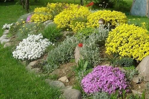 Najpiękniejsze ogródki skalne powstają w naturalnych zagłębieniach terenu i skarpach.