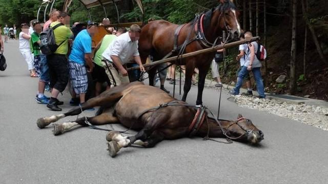 To zdjęcie zbulwersowało opinię publiczną. Po jego publikacji rozpętała się burzliwa dyskusja na temat warunków, w jakich pracują konie wożące turystów do Morskiego Oka.