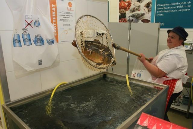 Karpi będzie pod dostatkiem. Są tańsze niż rok temu Pracownik Tesco Extra w Galerii Echo w Kielcach Dorota Milcarz łowi karpia, który sprzedawany jest w specjalnej torbie z wodą.