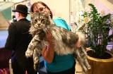 Najpiękniejszy Barney. Wystawa kotów w Galerii Łódzkiej [film, zdjęcia]