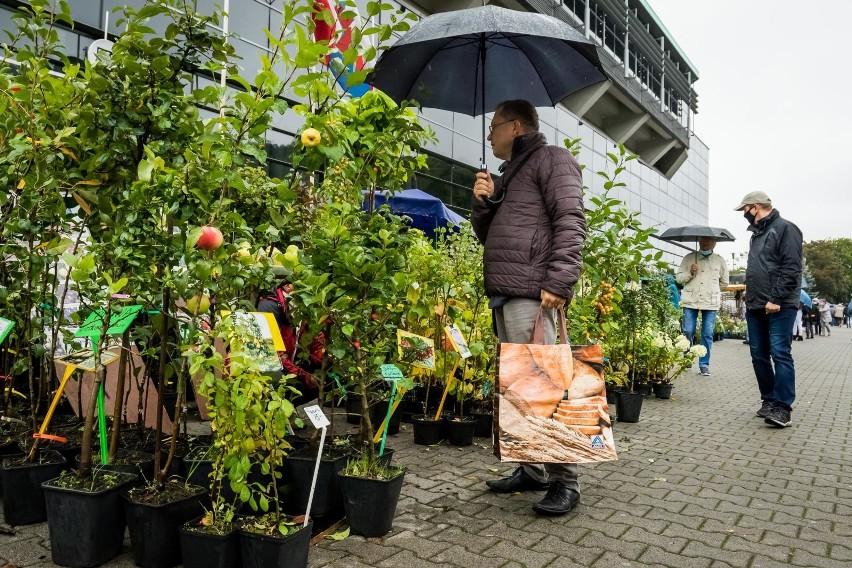 Każdy, kto chce upiększyć swój ogród, działkę czy balkon w ten weekend (26 i 27.09.) powinien się wybrać na Jesienny Kiermasz Ogrodniczy. To już 35. edycja tego wydarzenia. Wystawcy, jak zawsze, mają bogatą ofertę szaty roślinnej. Do wyboru są m.in. drzewka owocowe  (w doniczkach i wykopane z gruntu) jak: jabłonie, wiśnie, czereśnie. Nie brakuje też krzewów owocowych, w tym z nowymi gatunkami borówek i jagód, winorośli. Ponadto krzewy ozdobne, m.in. róż gruntowych. Znajdą też coś dla siebie miłośnicy storczyków i roślin storczykowatych, sukulentów. Dostępne są też m.in. cebule, zioła, wrzosy, trawy, nawozy czy elementy wyposażenia i małej architektury ogrodowej, np. fontanny. Na kiermaszu jest też okazja by się poradzić, np. na temat stosowanie bezpiecznych nawozów.Jesienny Kiermasz Ogrodniczy można odwiedzić jeszcze w niedzielę (27.09.) do godz. 17. Wystawcy czekają przed bydgoską halą Immobile Łuczniczka i chociaż pogoda deszczowa, większość stoisk jest zabezpieczona. Osoby wybierające się na ogrodnicze zakupy proszone są, by pamiętać o zakrywaniu nosa i ust oraz zachowaniu min. 1,5 m dystansu od innych osób. Wstęp wolny.