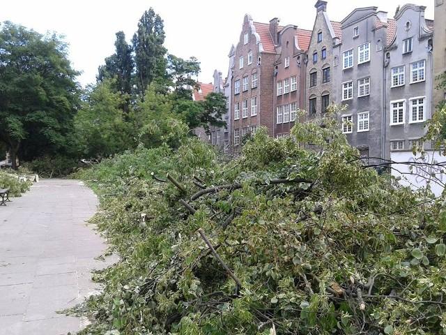 O wycince drzew przy ul. św. Ducha poinformował nas internauta