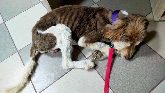Zaniedbanym i chorym zwierzęciem zajęło się Jelczańskie Stowarzyszenie dla Zwierząt