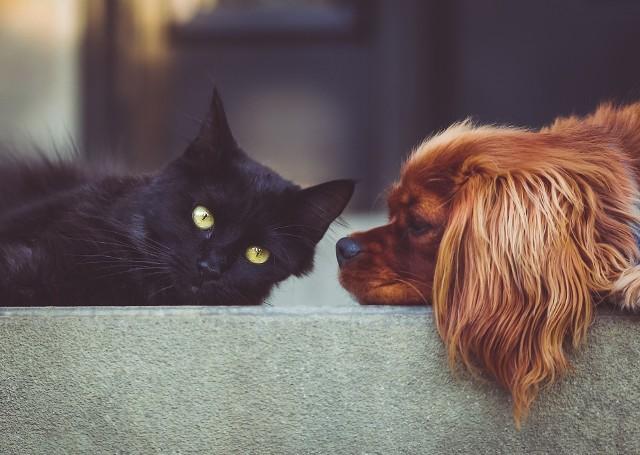Wynajem mieszkania z psem lub kotemZwierzęta domowe sprawiają wiele radości swoim właścicielom, ale w wynajmujących budzą raczej obawy.