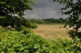 Sposoby na zadbane łąki i pastwiska