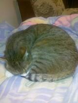 Na Czubach zaginął kot. Widziałeś go?