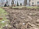 """Projekt BO, który zakładał monitorowanie gdyńskich drzew wycofany. """"I tak ostatecznie zostaną one później wycięte, wbrew mieszkańcom"""""""