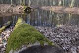 Nie tylko w Zielonej Górze Krępie możesz podziwiać Las Odrzański. Piękne starorzecza zobaczysz też w okolicach Wysokiego. Tu jest magicznie!