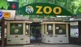 Zoo Poznań: Policja przeszukała ogród zoologiczny. Zdaniem prokuratury zoo nie poinformowało o kastracji zwierząt