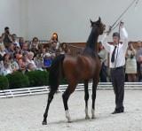 Wielka Parada Michałowa. Zobacz najdroższe konie