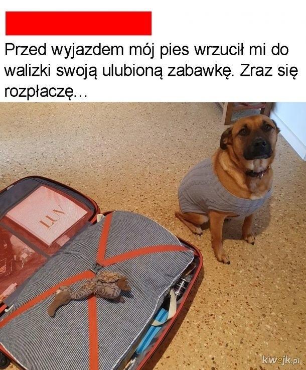 Dzień Psa 2020. Najlepsze psie memy