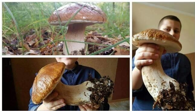 Niektórzy narzekają, że w tym roku grzybów już nie będzie....
