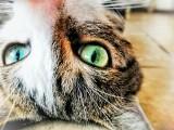 Najpiękniejsze koty naszych Czytelników [GALERIA ZDJĘĆ]