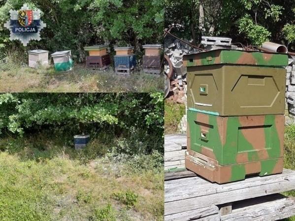 Kradli ule z rodzinami pszczelimi. Grozi im 5 lat