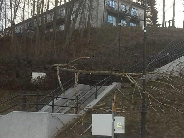 W Żukowie drzewo przewróciło sie na schody prowadzące do parku