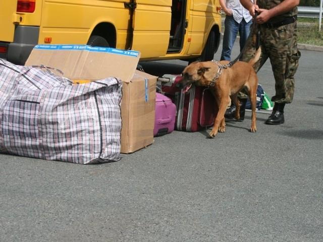 Dzięki psu Straż Graniczna ze Świecka znalazła znaczny ładunek narkotyków