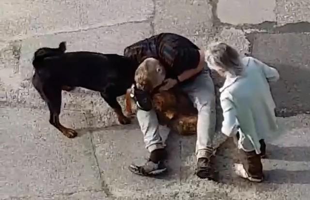 Agresywny pies typu rottweiler zagryzł mniejszego czworonoga na osiedlu Młodości w Chrzanowie