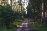 Poczopek. Nocne Misteria leśne już w sierpniu. Trwają zapisy