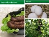 Podlaski e-bazarek. Jabłka, wędliny i miód możesz kupić prosto od rolnika