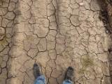 Rolnicy, których gospodarstwa dotknęła klęska żywiołowa, już od 7 maja mogą składać wnioski o pomoc