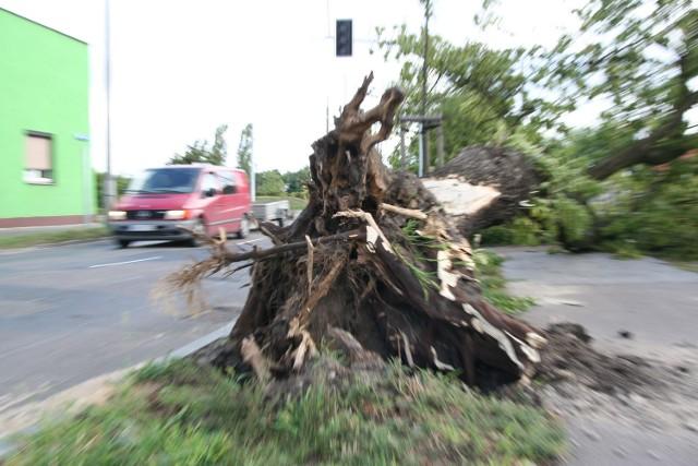 Przewrócone drzewo na ul. Okrężnej