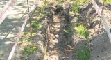 Georadarem szukają dworu w parku