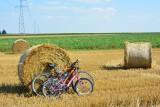 Chcą likwidacji przepisów ograniczających obrót gruntami rolnym