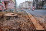 Zakopią topór wojenny w sprawie drzew przy Lipowej. Prezydent porozumiał się z radnymi PiS, ale nie ze wszystkimi